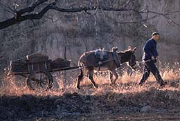 A farmer and his cart on the grounds of the Ming Tombs north of Beijing, China.