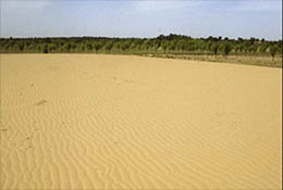 Trees planted to hold back the desert near Yulin, China.