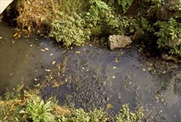 A vegetable garden planted near a polluted stream in Beijing, China.