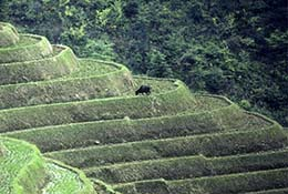 Terraced hills in Guangxizhuan Autonomous Region, China.