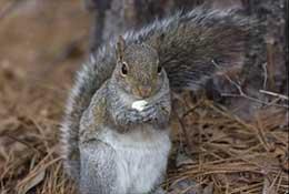 Squirrel, North Carolina.