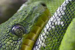 Snake, North Carolina.