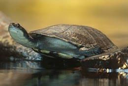 Turtle, Santa Barbara Zoo, Santa Barbara, California.