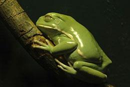 Frog, North Carolina.