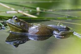 Frog at Duke Garden, Durham, North Carolina.