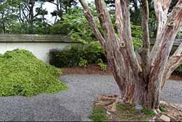 Composite panorama of a Japanese garden, Raleigh, North Carolina.