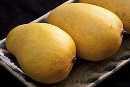 Mangos on Japanese plate.
