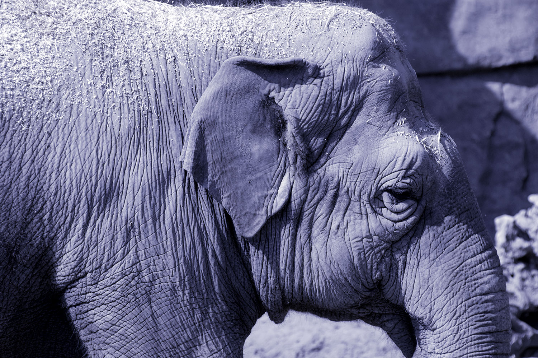 No More Purple Elephants